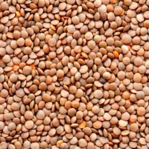 Masoore Brown Lentils